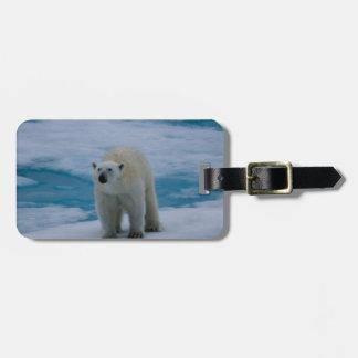 Polar refiera el hielo de paquete etiquetas para maletas