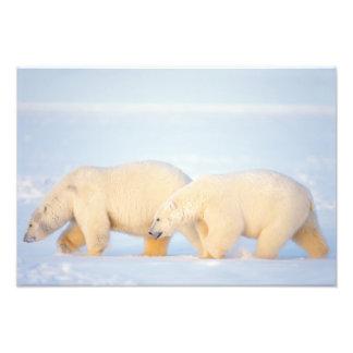 Polar refiere el ártico congelado, 1002 costeros cojinete