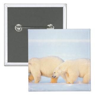 Polar refiere el ártico congelado, 1002 costeros pin cuadrada 5 cm