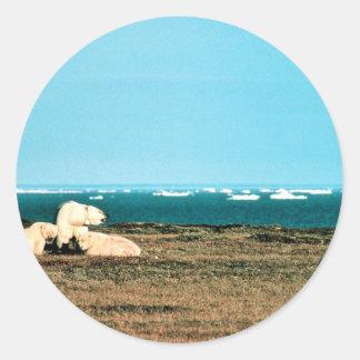 Polar refiere la isla de trueque pegatina redonda