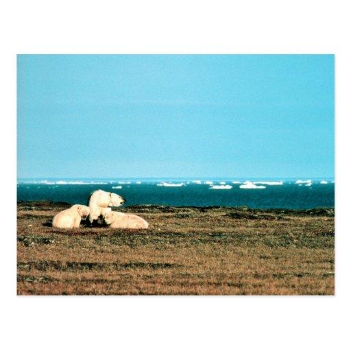 Polar refiere la isla de trueque tarjeta postal