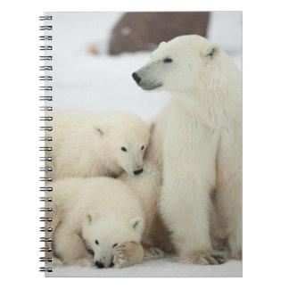 Polar She-bear With Cubs Notebook