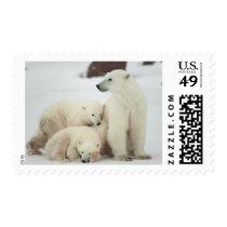 Polar She-bear With Cubs Postage