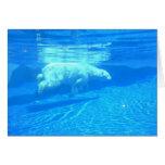 Polar swim greeting cards