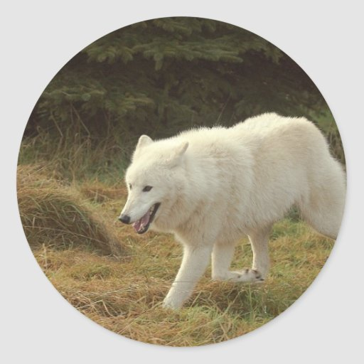 Polar Wolf Classic Round Sticker