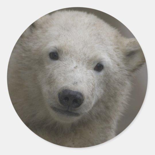 Polarbear Classic Round Sticker