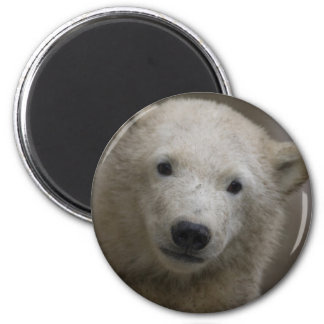 Polarbear Imán Redondo 5 Cm