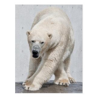 Polarbear walking post card