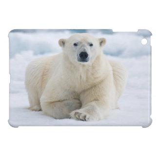 Polares adultos refieren el hielo de paquete del