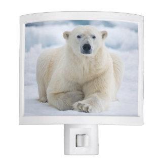 Polares adultos refieren el hielo de paquete del luces de noche