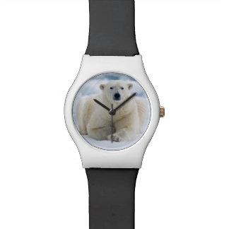 Polares adultos refieren el hielo de paquete del relojes