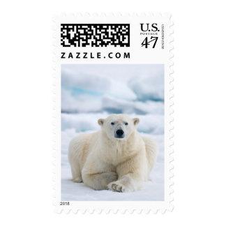 Polares adultos refieren el hielo de paquete del sello postal
