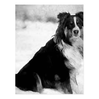 Polaris the Eskimo Dog in the Snow Postcard