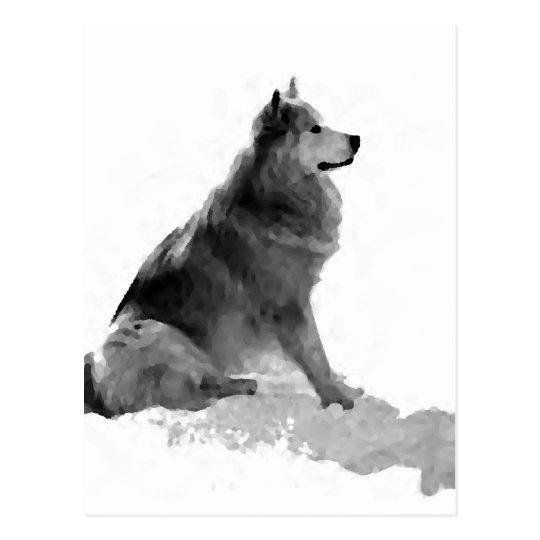 Polaris the Eskimo Dog Postcard