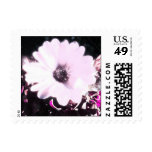 Polarized African daisy Stamps