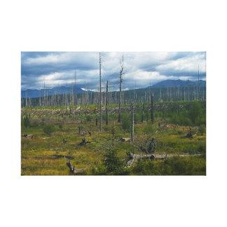Polebridge Area Burnout Glacier National Park Canvas Print