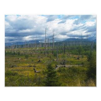 Polebridge Area Burnout Glacier National Park Photo Print