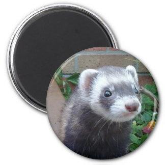 Polecat ferret 2 inch round magnet