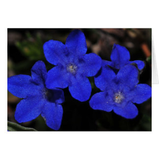 Polemonium Greeting Card