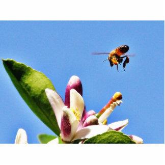 Polen de la abeja fotoescultura vertical