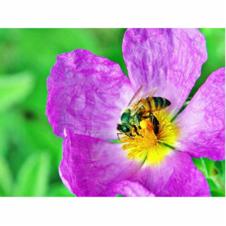 Polen de los insectos de las abejas escultura fotografica