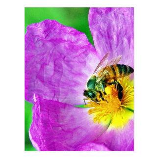 Polen de los insectos de las abejas tarjetas postales