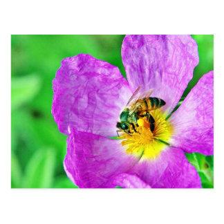 Polen de los insectos de las abejas postal