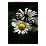 Police Car Moth and Oxeye Daisies Cards