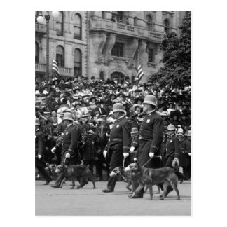 Police Dogs on Parade early 1900s Post Card