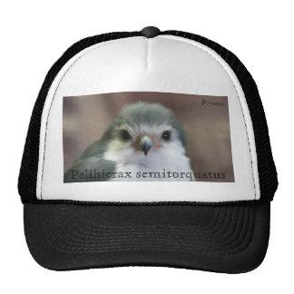 Polihierax semitorquatus trucker hat