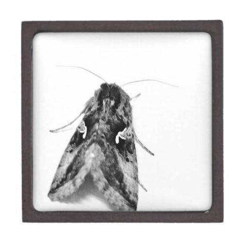 Polilla blanco y negro cajas de joyas de calidad