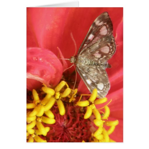 Polilla bonita en tarjeta de felicitación roja de