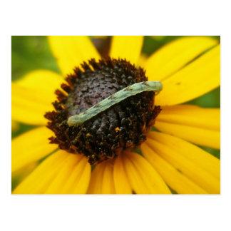 Polilla común Caterpillar del barro amasado que co Postal