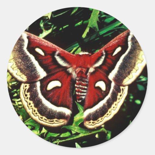 Polilla de Cecropia Pegatina Redonda