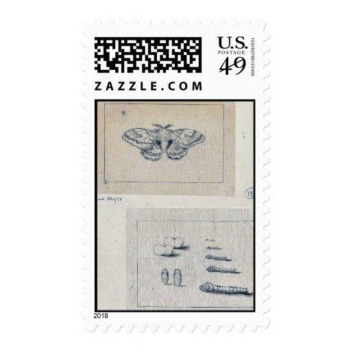 Polilla de gusano de seda y etapas larvales del timbres postales