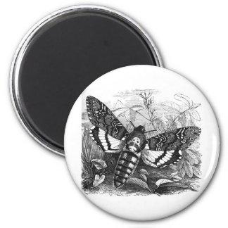 Polilla de halcón de Deathshead Imán Redondo 5 Cm