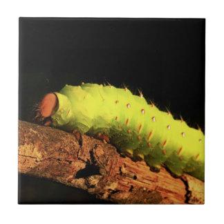Polilla de Luna Caterpillar Teja