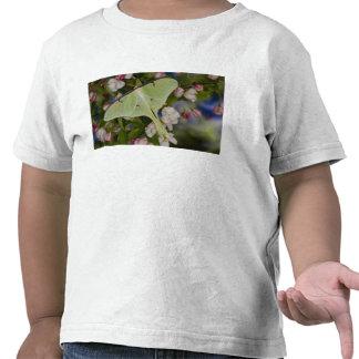 Polilla de seda masculina de Luna de Camisetas