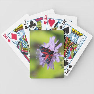 Polilla hermosa barajas de cartas