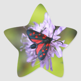 Polilla hermosa calcomanía forma de estrella personalizada