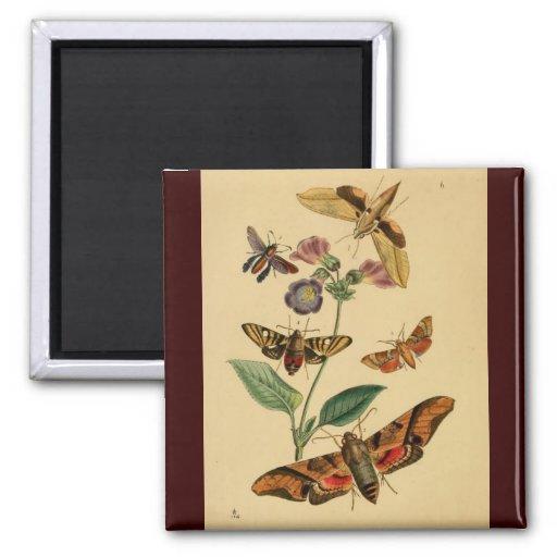 Polilla Magnent de la mariposa Imán De Nevera