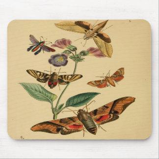 Polilla Mousepad del vintage Tapetes De Ratones