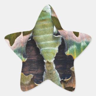 Polillas de halcón de la cal pegatina en forma de estrella
