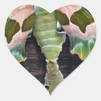 Polillas de halcón de la cal pegatina en forma de corazón