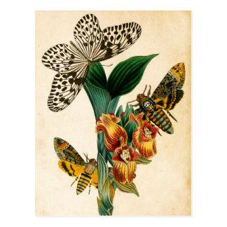 Polillas de la mariposa y del Acherontia de la Tarjeta Postal