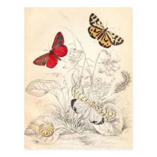 Polillas y mariposas postal
