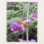 "Polinating bee on lavender. planner<br><div class=""desc"">Taken at a local garden centre.</div>"