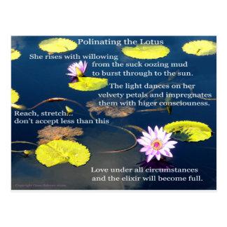 Polinating Lotus Tarjetas Postales