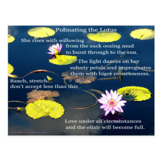 Polinating the Lotus  Post Card