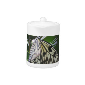 Polinating White and Black Butterfly